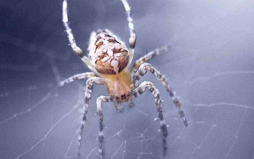 Служба уничтожения пауков