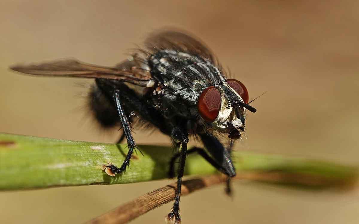 Служба уничтожения мух
