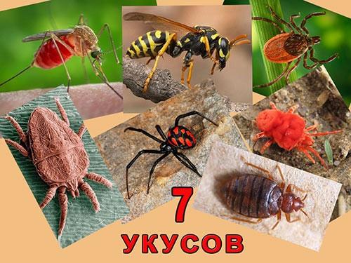 7 укусів комах, які не можна ігнорувати